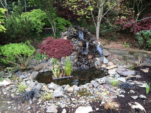 Backyard Pond and Waterfall