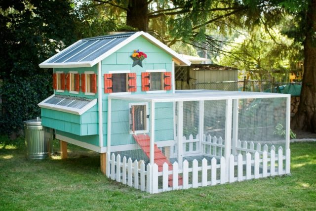 The One Where I Built a Chicken Coop