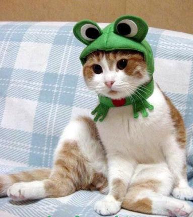 Cat Frog Costume