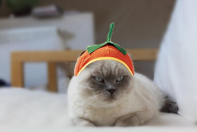Cat Halloween Costume Pumpkin