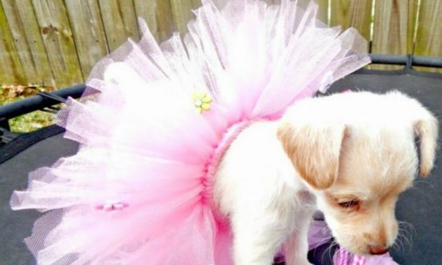 DIY Doggie Tutu Tutorial