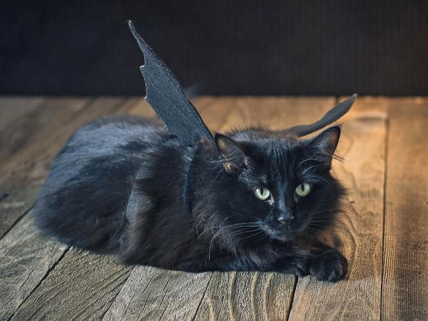 Halloween Pet Costume Black Bat