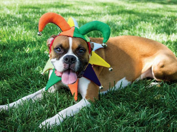 Halloween Pet Costume Court Jester