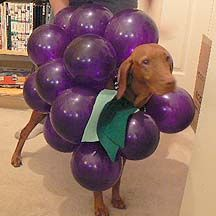 Make Your Dog Into a Bunch of Grapes For Halloween