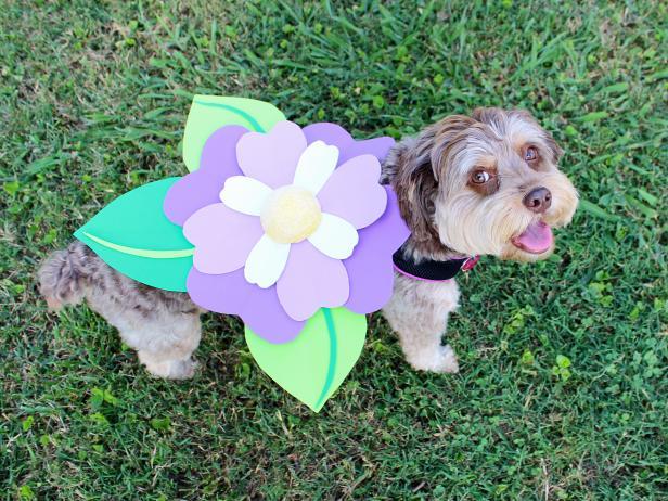No Sew Halloween Pet Costume Flower