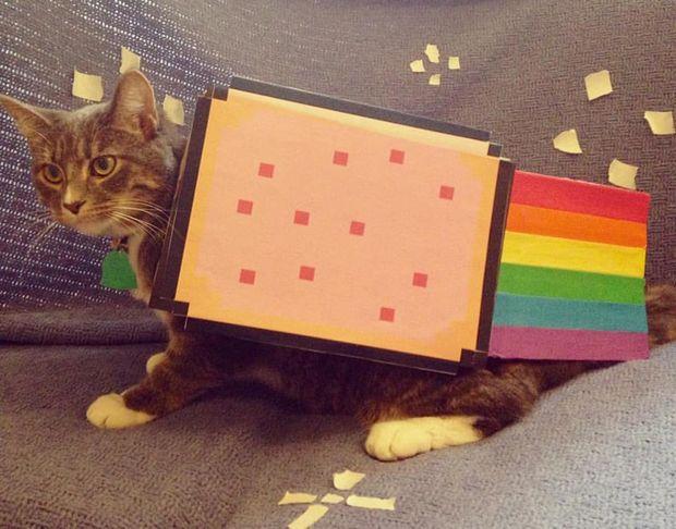 Nyan Cat Pet Costume