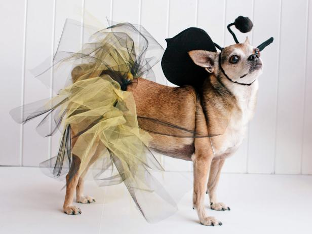 Pet Halloween Costume Bumblebee