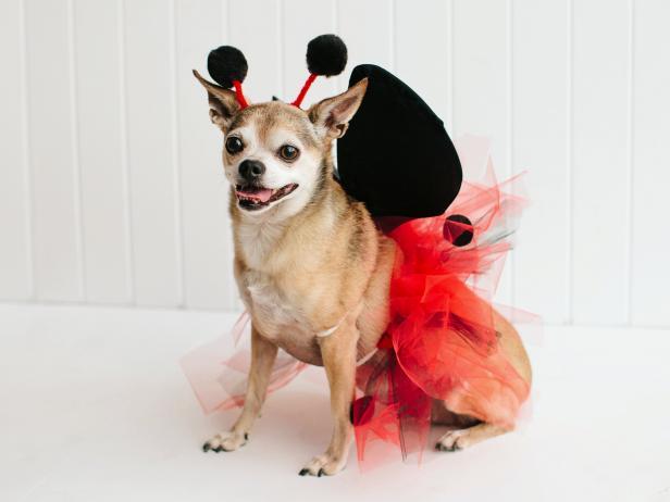 Pet Halloween Costume Little Ladybug