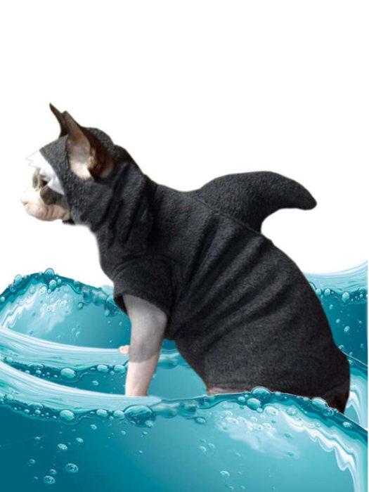 Shark Costume Kitten