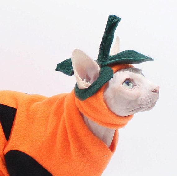 Sphynx Cat Costume Hat Pumpkin