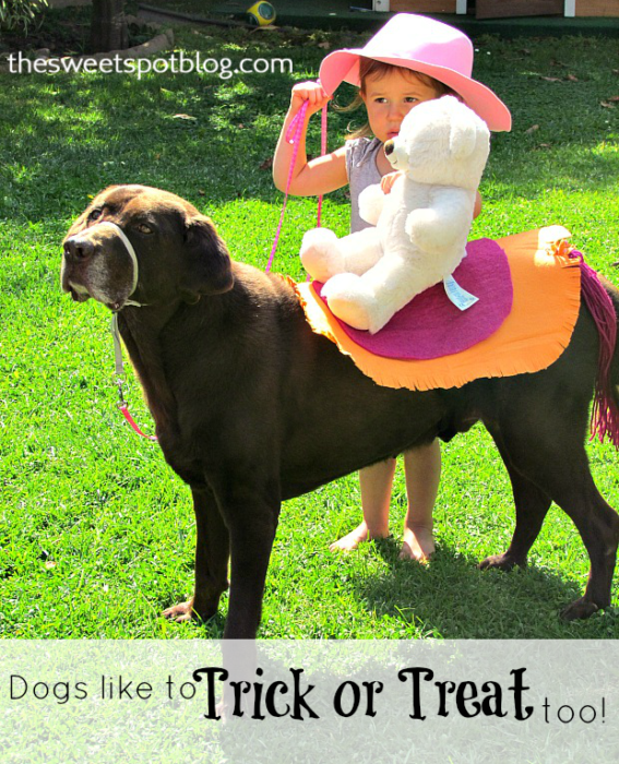 Trick or Treat for Big Dogs