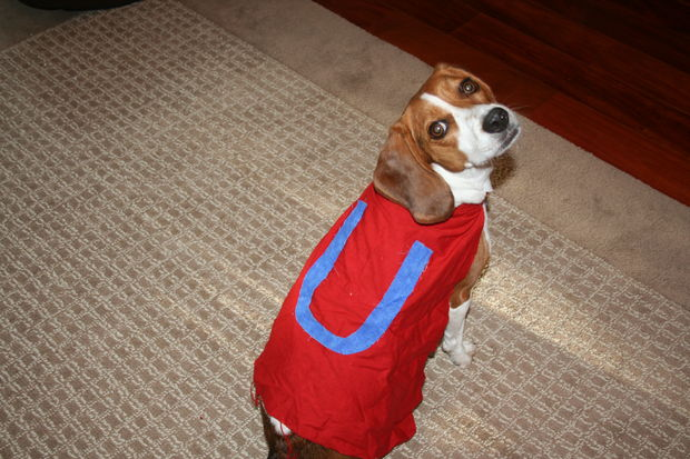 Underdog Cape For Your Dog