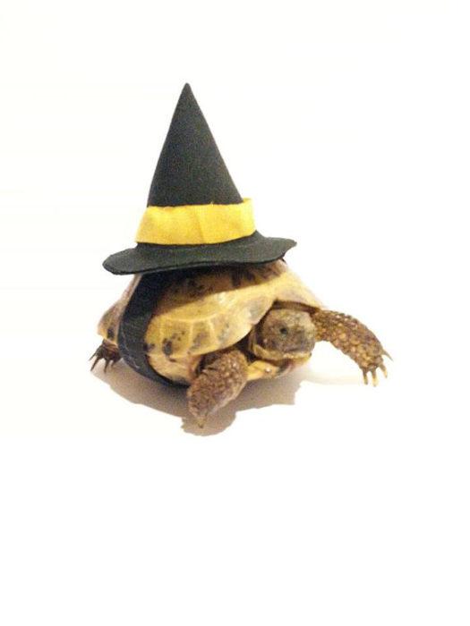 Witch Hat Tortoise Costume