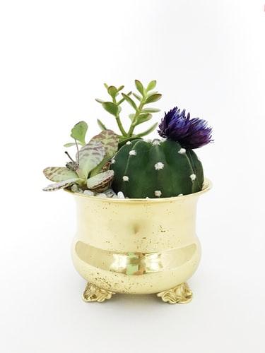 cactus in gold planter