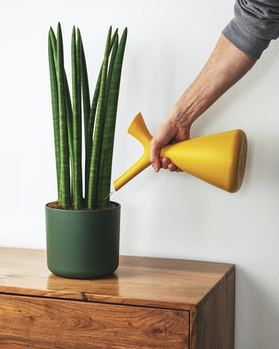 Man watering green plant with yellow watering can
