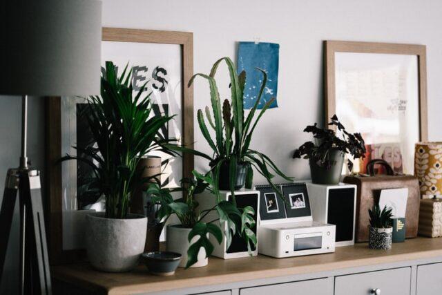 Houseplants on desk