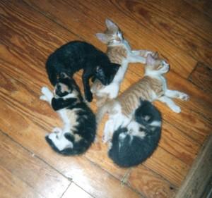 Kitens do their own form of pets prayer