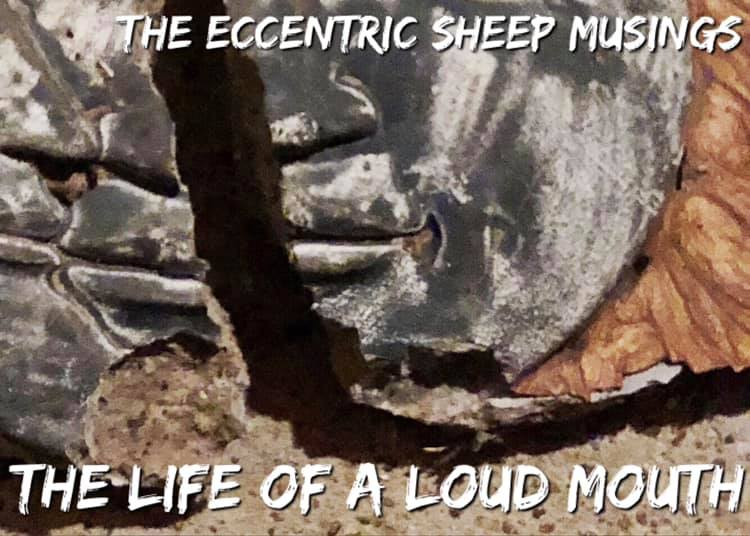 The Eccentric Sheep Musings: The Life of a Loud Mouth
