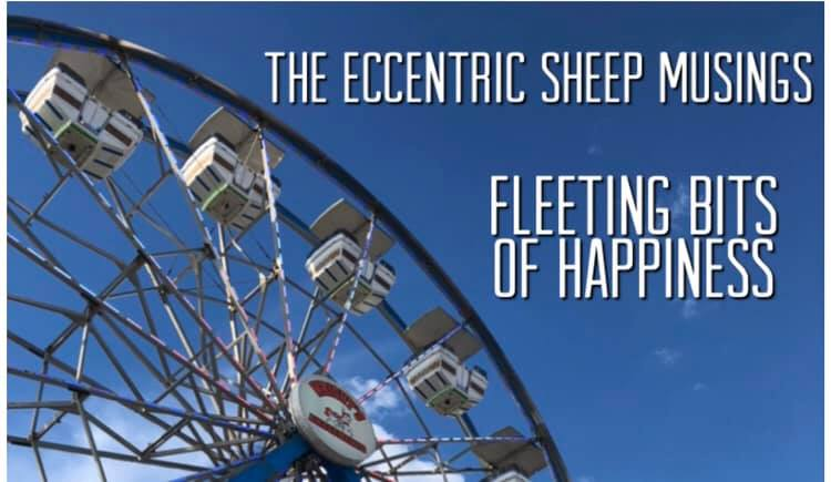 The Eccentric Sheep Musings: Fleeting Bits of Happiness