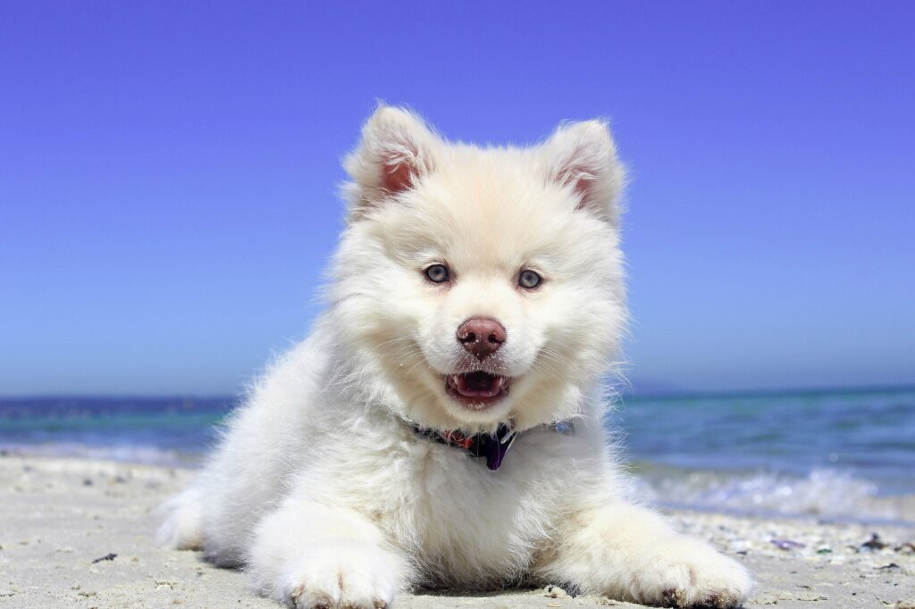 Cbd-oil-to-help-your-dog