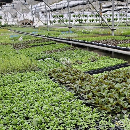 Westel Greenhouse