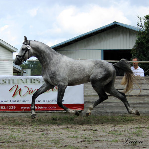a-Aria Holsteiner Inspections 10-2-14-11-1