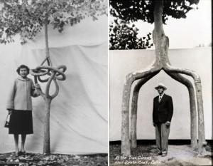 WW tree3