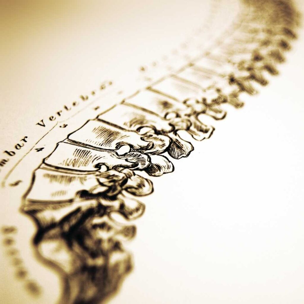 Pencil sketch of the human spine