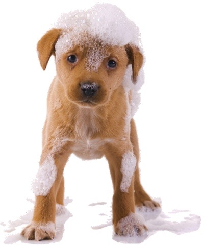 Puppy sessions allow your pets to adjust to the sights, sounds, smells and feels of the grooming process.