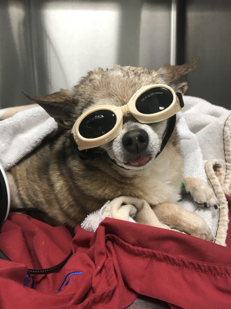 Patient during a post op incision laser therapy session