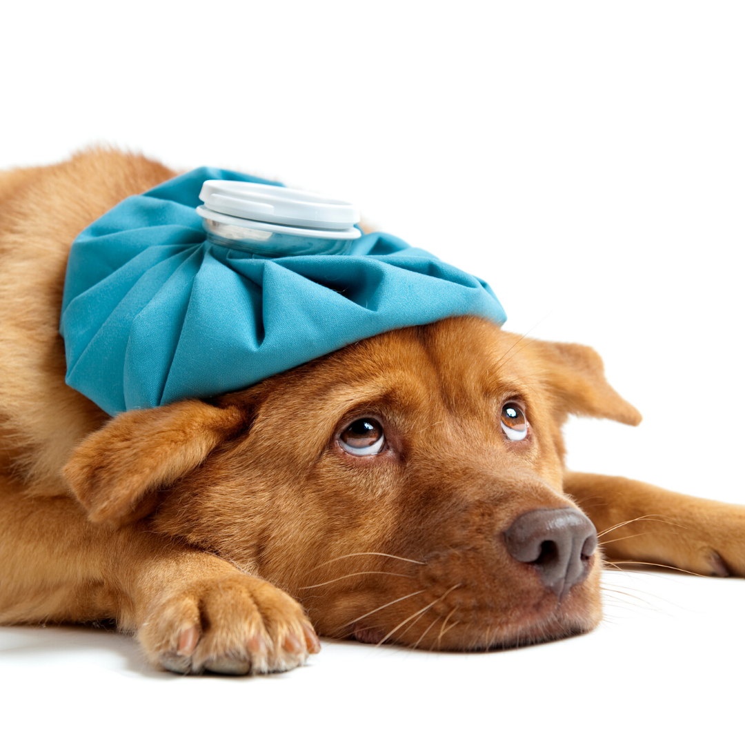 Sick visits available for your pet