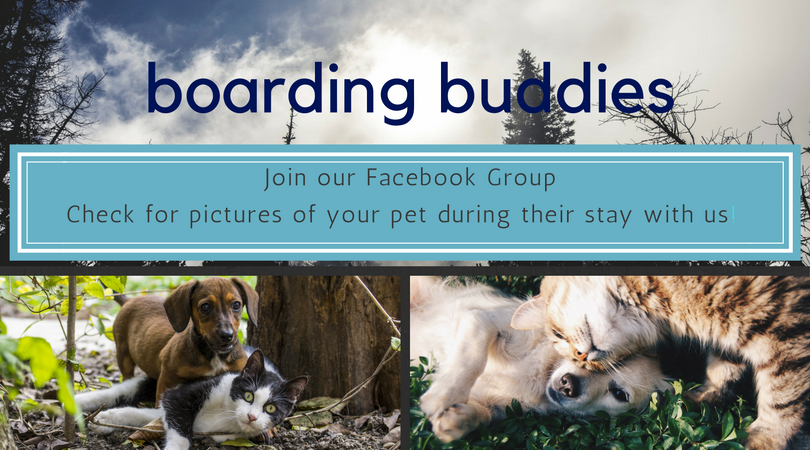 Boarding Buddies Program Stay 6 nights get 1 free