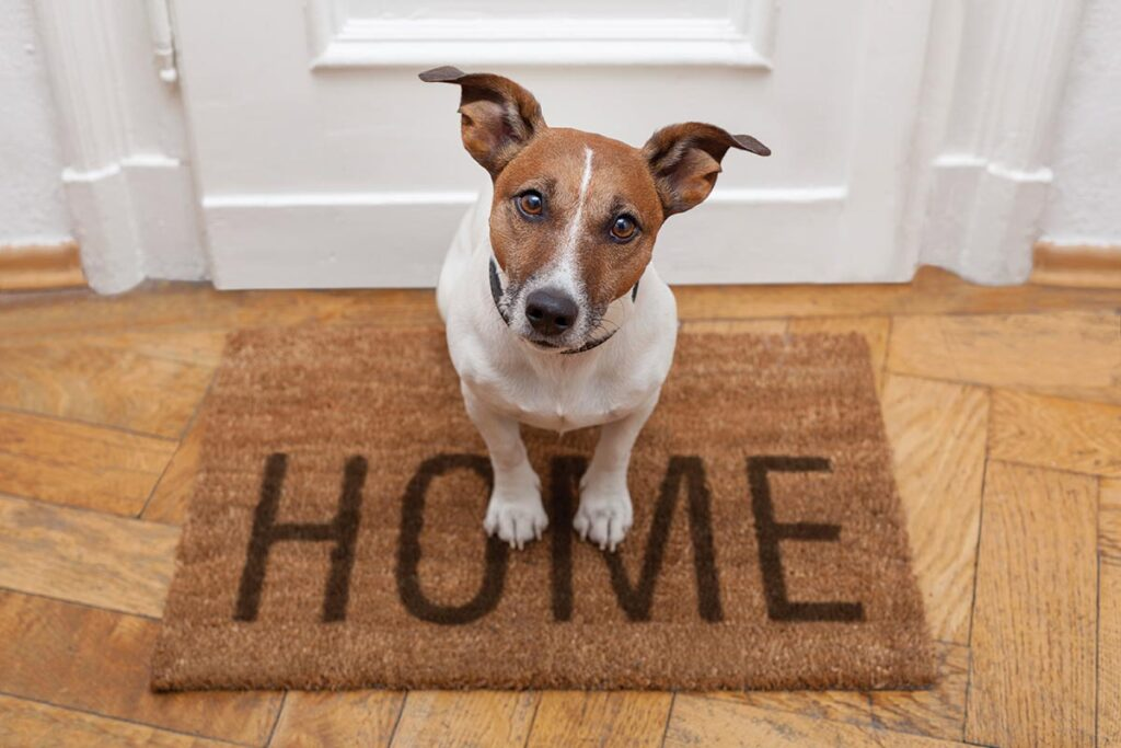 Common issues after pet boarding