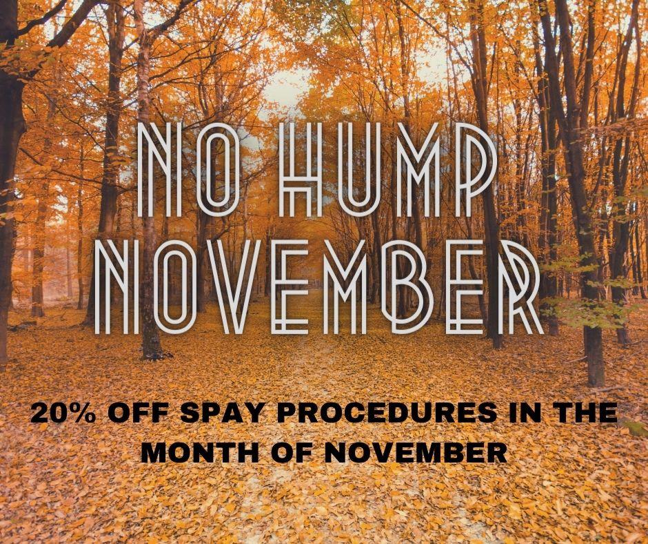 november no hump november specials
