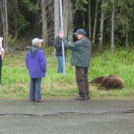 Life in Alaska with Bears