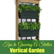 Tips to Growing a Stellar Vertical Garden