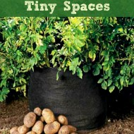 Grow Potatoes in Tiny Spaces