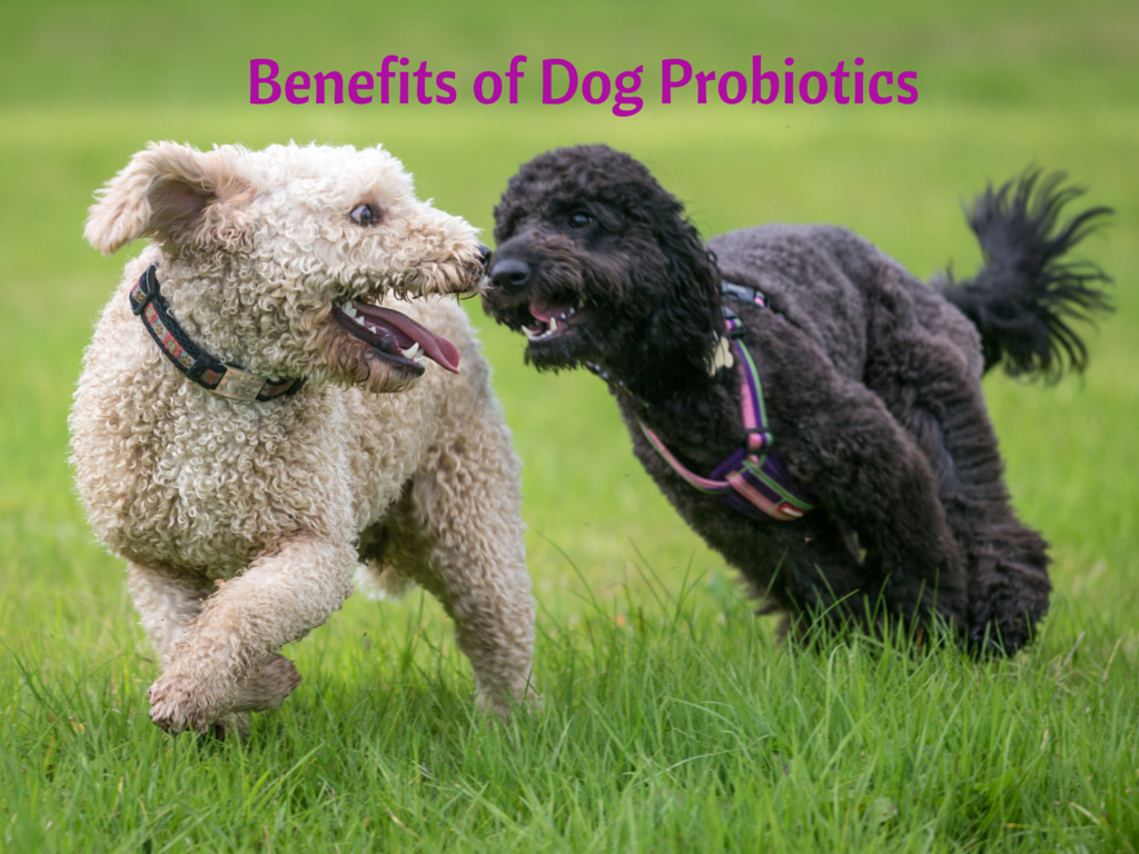 Benefits of Dog Probiotics