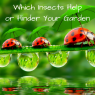 Insects That Help or Hinder Your Garden