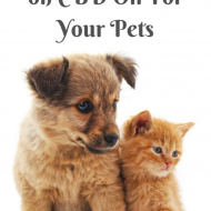 Newest Research on CBD Oil For Your Pets