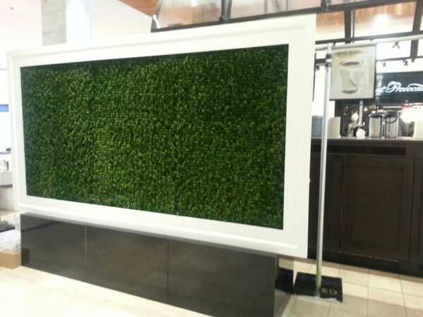 Faux Boxwood Wall with White Frame