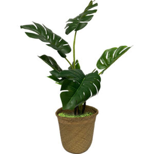 Plant Props