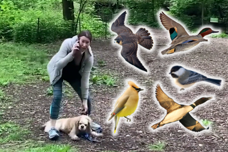 5 Fascinating Birds To Watch While A Karen Calls The Cops On You