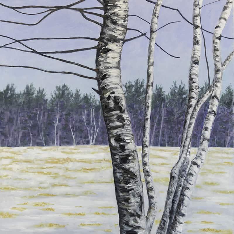 New Hampshire Birch