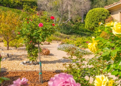 Rose and fruit tree garden