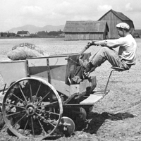 Planting potatoes in the 30s