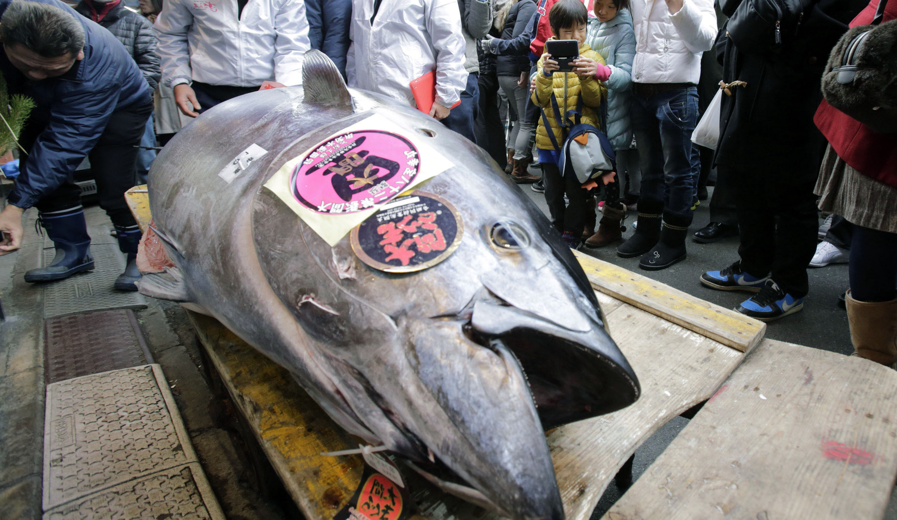 222 kilogram Bluefin Tuna