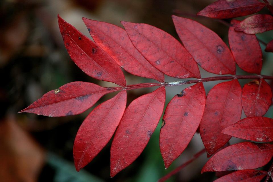 Rosewood Leaves