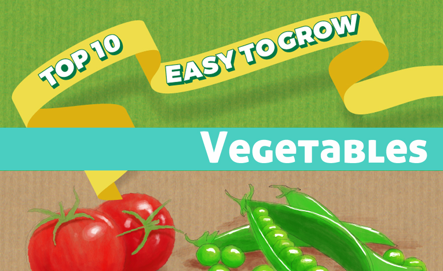 10 Fast Growing Vegetables That You Can Grow in Your Garden