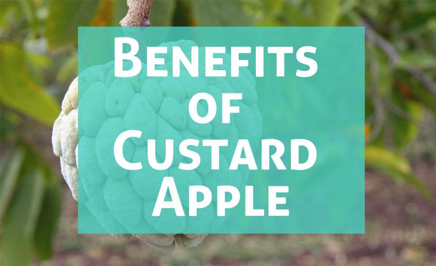 Atis Fruit: 10 Amazing Health Benefits of Custard Apple